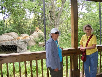 Maija and Gail stand in front of the                lion's exhibit. In the back, the half-grown                cub and the male lion look at the camera                while the female sleeps